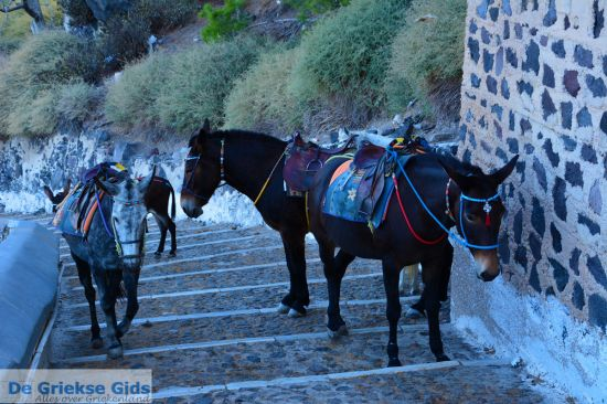 Ezels in Fira, Santorini
